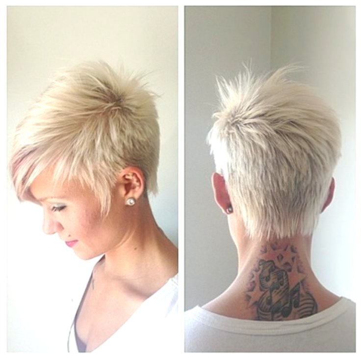 best of hairstyles shorthair online super hairstyles shorthair reviews